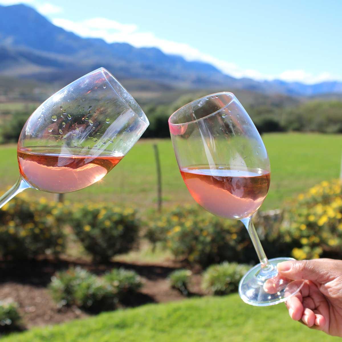 cederbergtours-winetour-tasting
